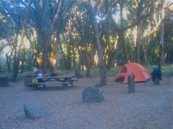 Henry Cowell Redwoods State Park: Campsite 11