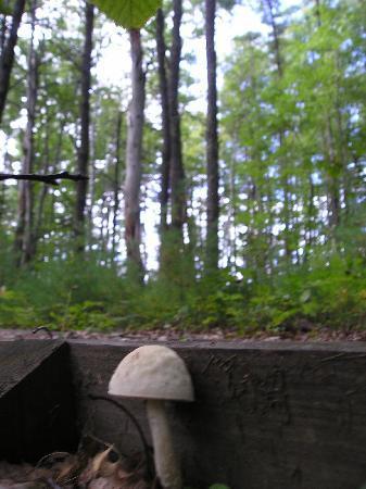 Rachel Carson National Wildlife Refuge: Mushrooms along the walking path.