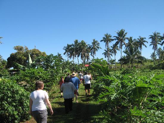 Vakaloa Beach Resort: Tour of the farm