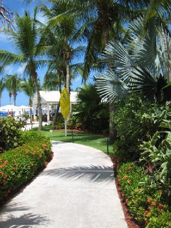 The Ritz-Carlton, Grand Cayman: walkway to beach
