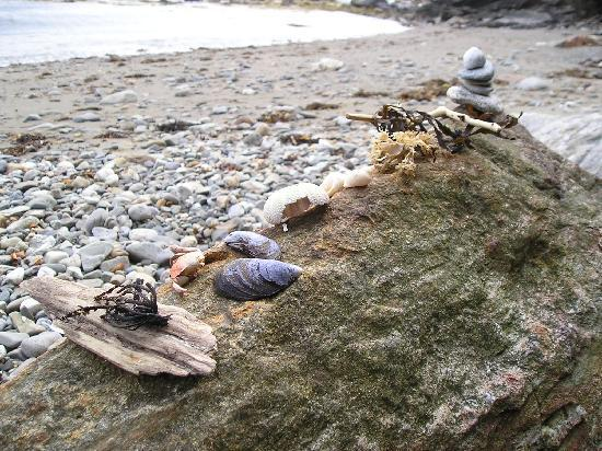 Beloin's on the Maine Coast: All kinds of shells and sea thingys