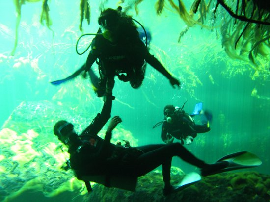 Koox Diving: diving in the cenotes