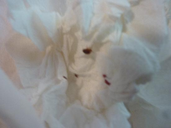 Alexander Hotel London: bedbug 2