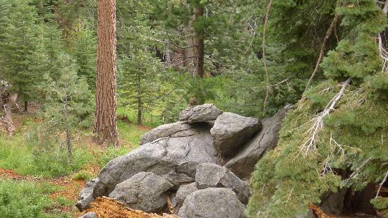 Glacier Point: Wooded area and hen bird on a rock