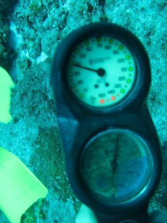Dive Paradise Cozumel: 40 pies de profundidad y bajando...