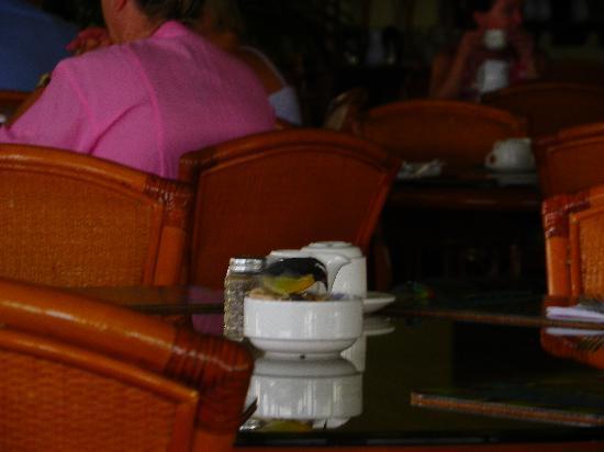 The Verandah Resort & Spa: breakfast with the birds