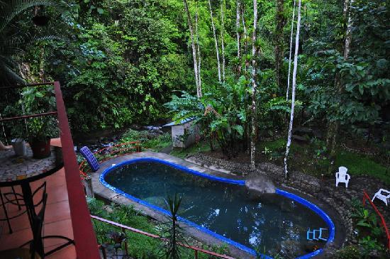 Agua Inn: Pool and rainforest