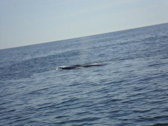 Cap'n Fish's Whale Watch: Fin Whale Sighting 9/21/11