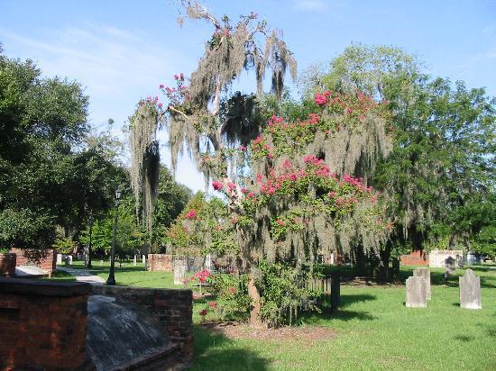 Colonial Park Cemetery: Beautiful tree!
