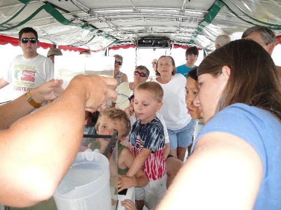 Amelia River Cruises: Adults and kids looking at the net's catch