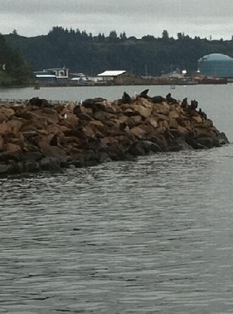 Newport's Historic Bayfront: sea lions on the rocks