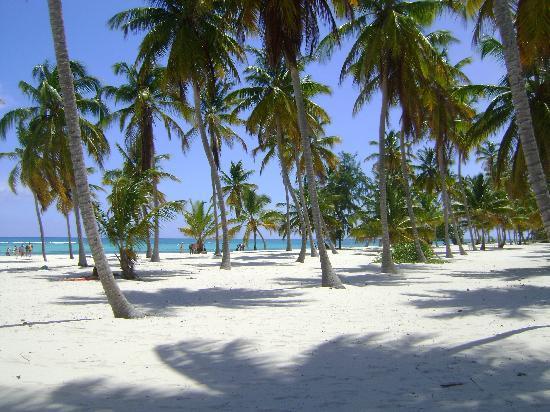 Isla Saona: Esto es un sueño... si parece mentira haber estado alli