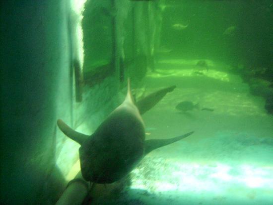 Clearwater Marine Aquarium: tiburonnnn!!!