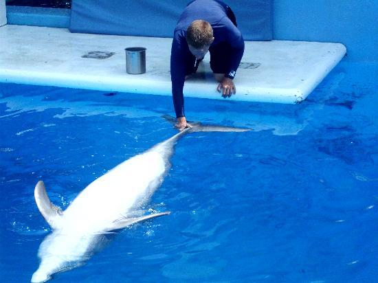 Clearwater Marine Aquarium: delfin de espalditas!!