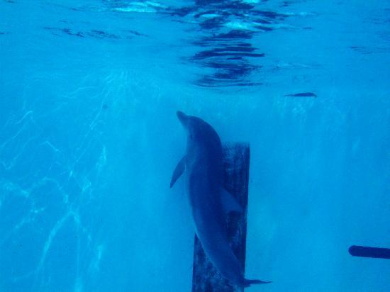 Clearwater Marine Aquarium: a travez de la ventana