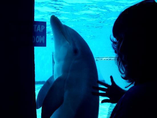 Clearwater Marine Aquarium: mimoso delfin