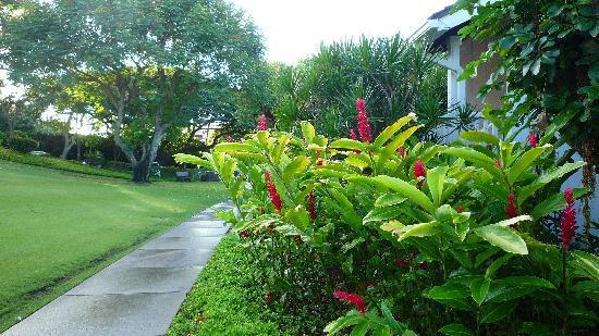 Kiahuna Plantation Resort: Landscaping