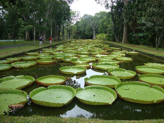 SSR Botanic Garden: Pamplemousses1