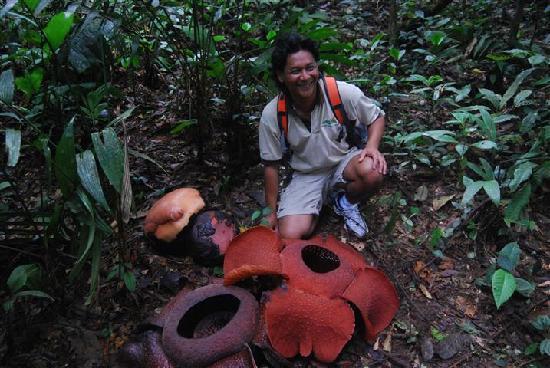 Cameron Secrets: Rafflesia Flower