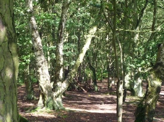 Sandstone Trail: The National Trust's 'Bulkeley Woods'