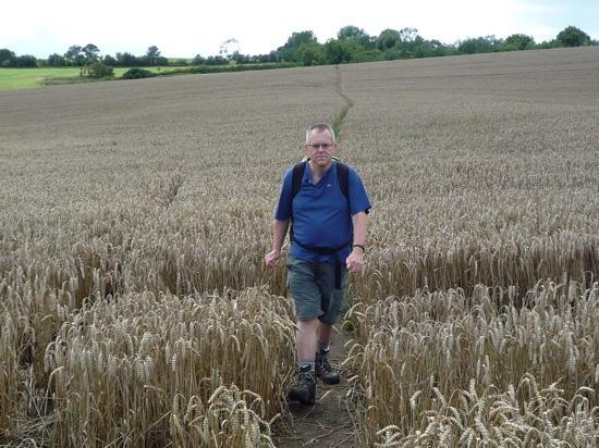 Sandstone Trail: Field of wheat on the Trail