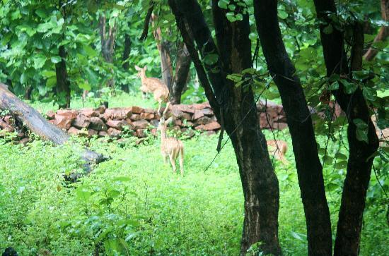 Madhya Pradesh, Indien: fauna