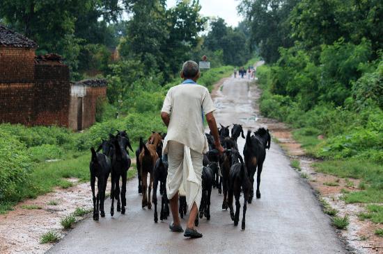 Madhya Pradesh, Indien: campesino