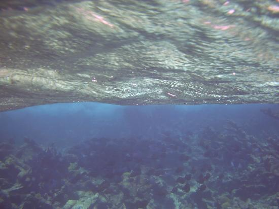 Buck Island Cove: see the school of blue fishes