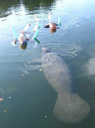 Manatees In Paradise: Thanks Stacy