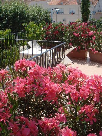 Villa Parisiana: les celebres lauriers Roses