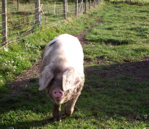 Spillers Farm: One of the friendly locals.