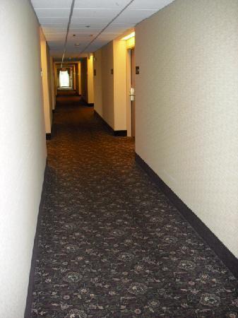 Hampton Inn Manheim Lancaster: 2nd floor hallway
