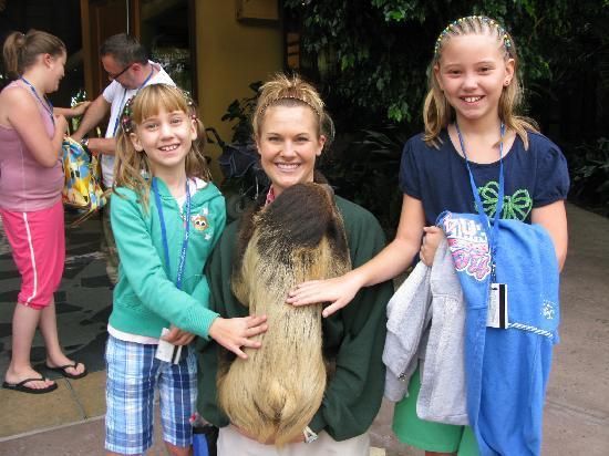 ดิสคัฟเวอรี โคฟ: Meeting Mr. Sloth