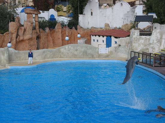 Parc Asterix: Dolphin show