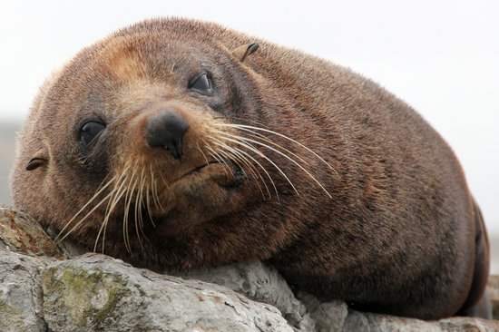 Kaikoura, New Zealand: Sleeping seal