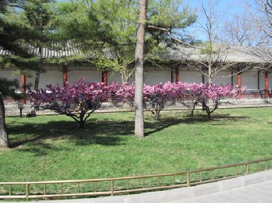 พระราชวังฤดูร้อน: Photo on grounds of Summer Palace, Beijing, China