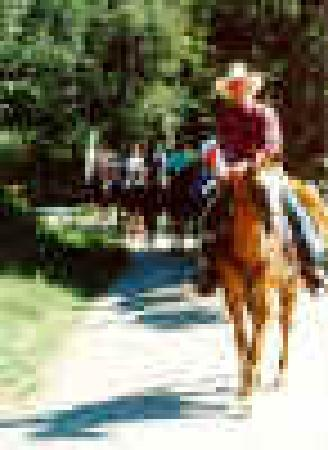 Roaring Brook Ranch & Tennis Resort: Horses