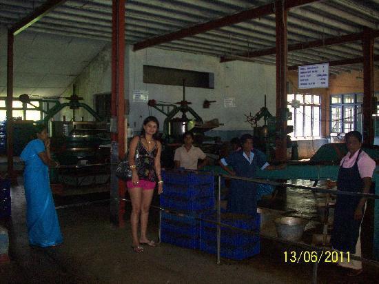 นูวาราเอลีอาและทีคันทรี: Blue Field Tea Company 13