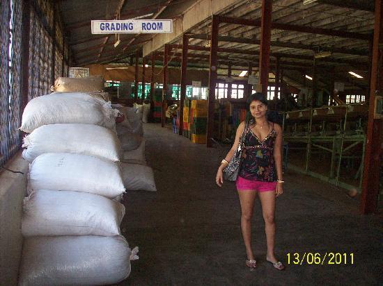 นูวาราเอลีอาและทีคันทรี: Blue Field Tea Company 11