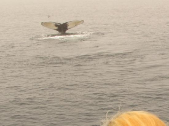 Mariner Cruises Whale and Seabird Tours: humpback fluke (tail fin)