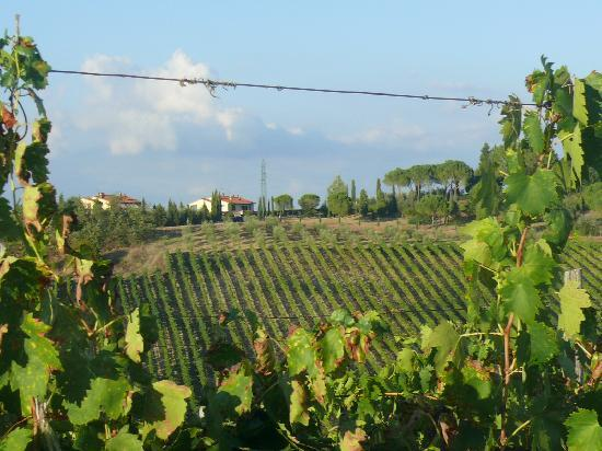 Le Tre Stelle: a walk in the vinyard