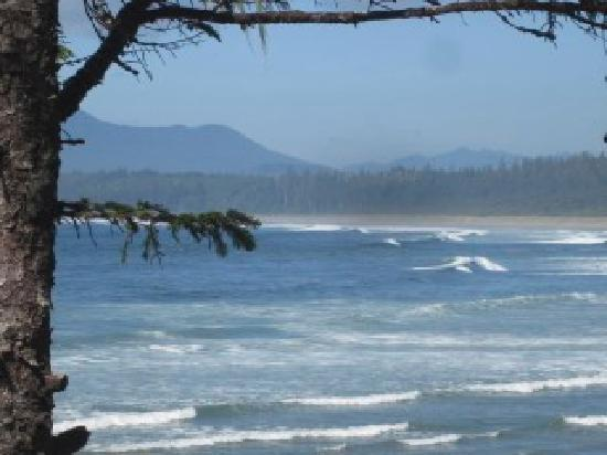 Crystal Cove Beach Resort: Küste bei Tofino