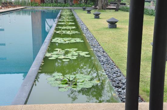 อนันตรา เชียงใหม่ รีสอร์ท แอนด์ สปา: Swimming pool