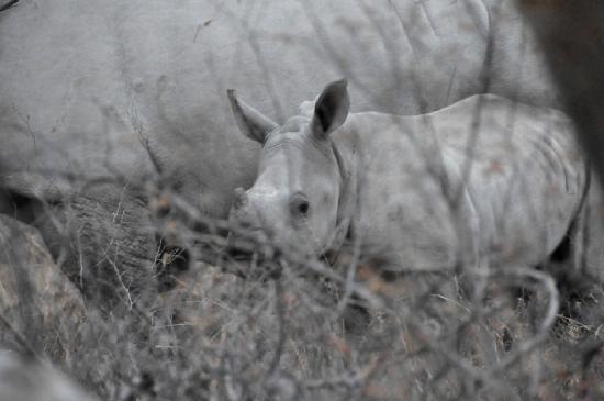 Khama Rhino Sanctuary: Young'n'cute