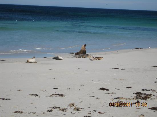 SeaLink Kangaroo Island: Seal Bay
