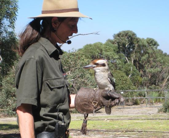 SeaLink Kangaroo Island: Kookaburra