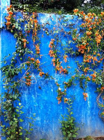 Casa Limon: A wall in their parking lot.