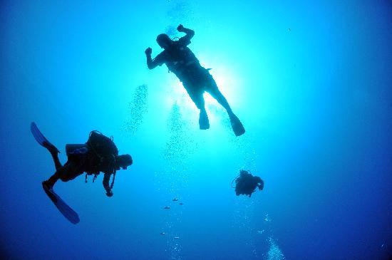 Akumal Dive Shop: Vista desde debajo