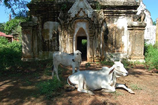 Snake Pagoda (Hmwe Paya): paleik