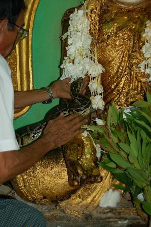 Snake Pagoda (Hmwe Paya): una de las pitones